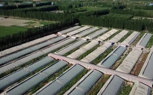 各类时令蔬菜陆续上市 农民增收的渠道更宽