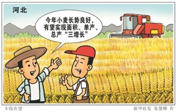 河北省小麦机收作业正式拉开序幕